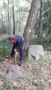 Eva gräbt das Rosenpflanzloch