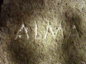 Alma vorher